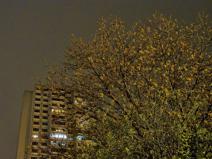 Low angle view of tree against building at night