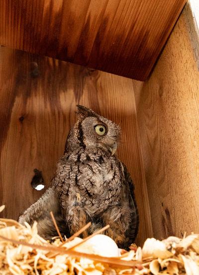 Portrait of owl perching on nest