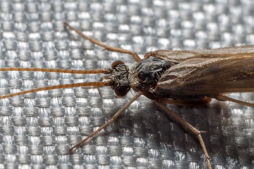 Köcherfliege, caddisfly Animal Animal Themes Animals Animals In The Wild Caddisfly Insect Insects  Köcherfliege Wild Wildlife Wildlife & Nature Wildlife Photography