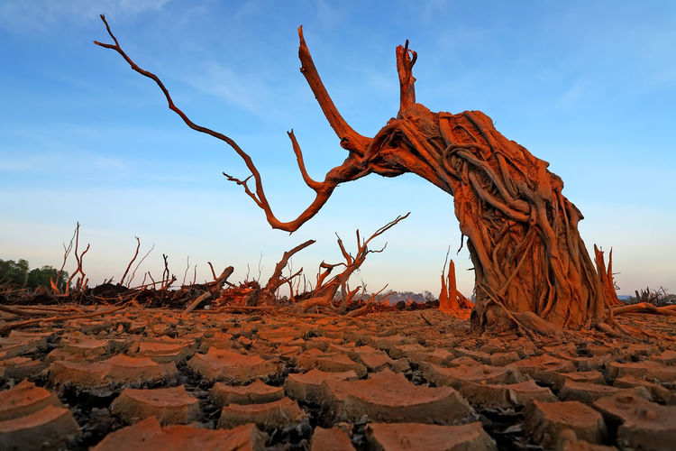 Global warming concept dead tree under dramatic evening sky Sky Land Tranquility Scenics - Nature Tranquil Scene Nature Non-urban Scene Beauty In Nature Environment Landscape Climate Day Desert Remote Sand Arid Climate Rock Formation No People Rock Rock - Object Dead Plant Outdoors Driftwood Dramatic Dramatic Landscape Moody Cracked Disaster Barren Barren Landscape Barren Tree Desert Hopelessness ASIA Asian  Thailand