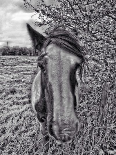 Bw_collection Blackandwhite Horse Hdr_Collection