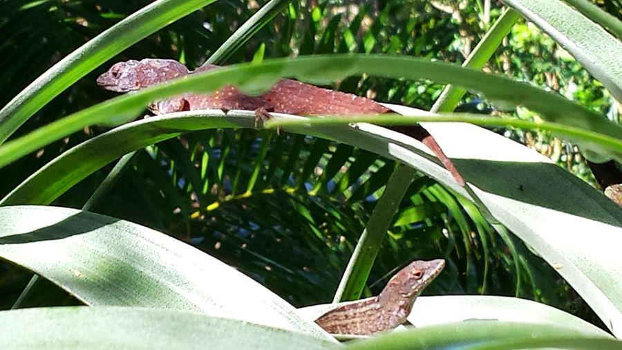 Lizards Lizard Love Lizard Watching Wildlife & Nature Animal Themes Backyard Critters