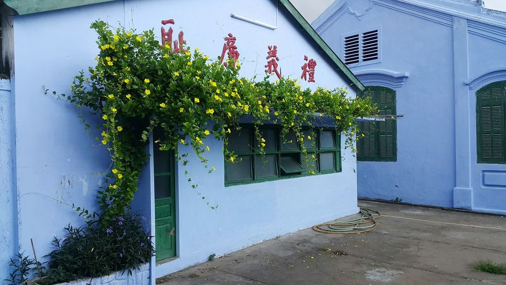 Hoian  HoiAnancienttown Blue Wall Houses And Windows Flowers Green Color Door Plants 🌱 Old Town Lovely