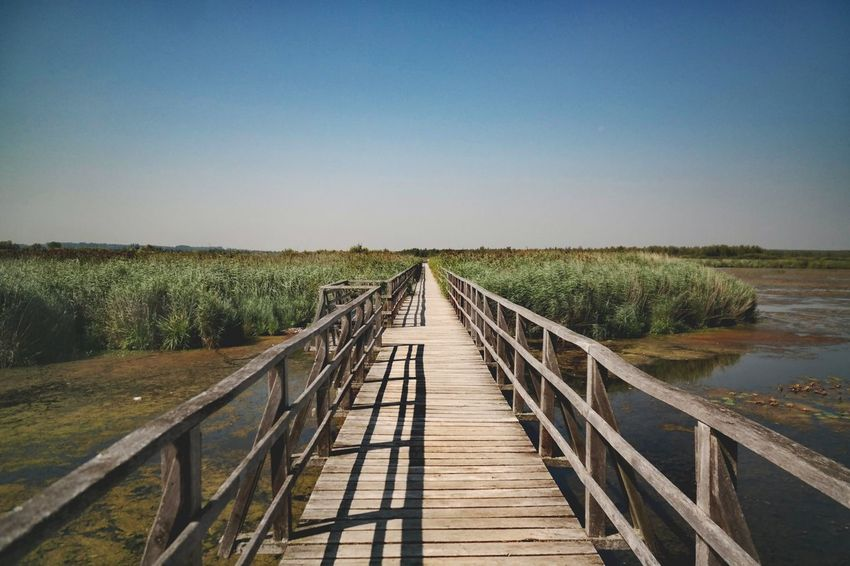 Federsee - the way forward Federsee Nature Photography Beauty In Nature My Point Of View Clear Sky Water Sky vanishing point Pathway Diminishing Perspective The Way Forward Long Passageway