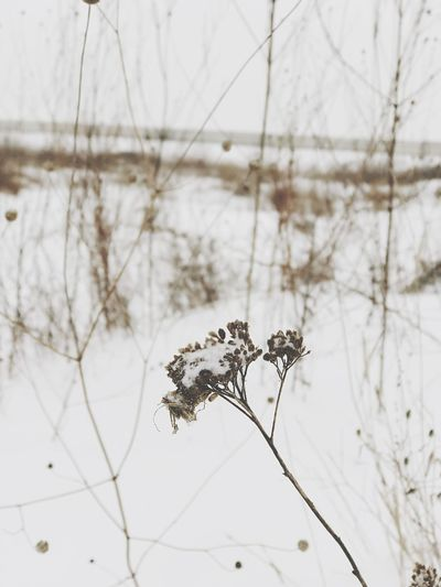 EyeEm Selects Nature Close-up Dead Plant Focus On Foreground Beauty In Nature Day One Animal Winter No People Fragility Branch Outdoors Animal Themes Flower