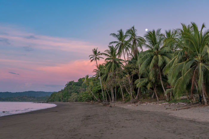 Sea Sunset Tree Landscape Nature Sand Water Outdoors Beach No People EyeEmNewHere Palm Palm Tree Travel Beauty In Nature Colours Of Nature Costa Rica Osa Peninsula Drake Bay Corcovado Corcovado National Park Central America Reisen Reisefotografie