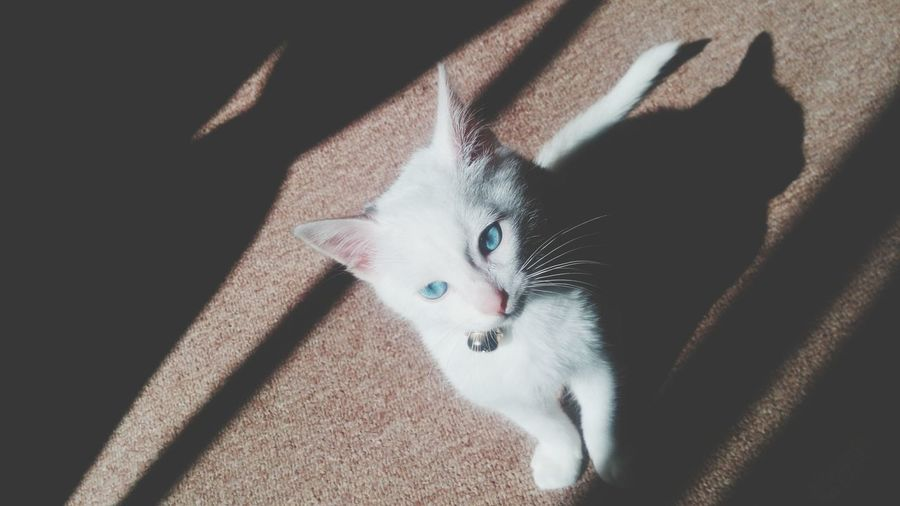 Last photo of 2014, happy new year :) Cat♡ Blue Eyes Mycat