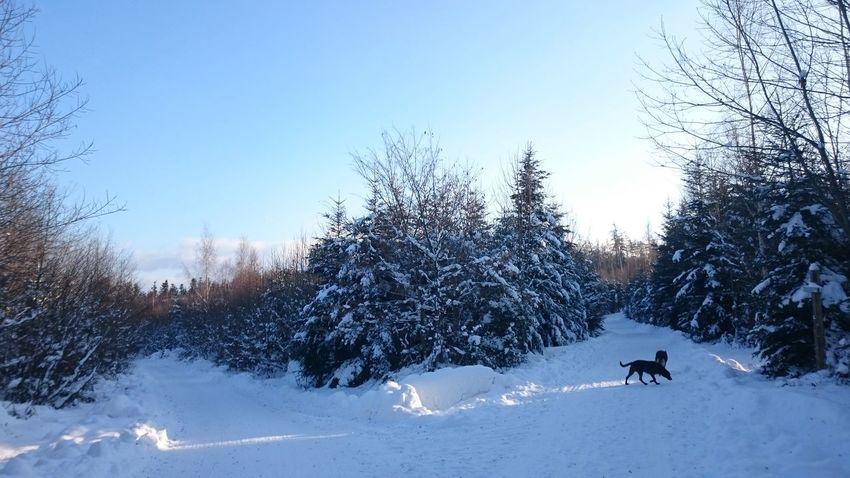 Winter Wintertime ⛄ Schwarzwaldliebe Black Forest Germany