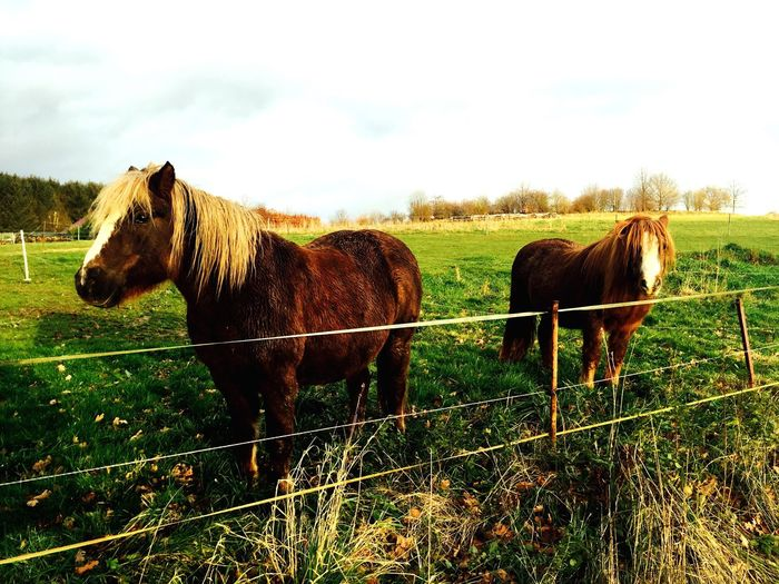 That was an awesome day. Hanging Out Horse Sabbath Happy Sabbath! Cheese! Nature Clouds And Sky Horses Green Animals Taking Photos Enjoying Life Check This Out Hi! Hello World Germany