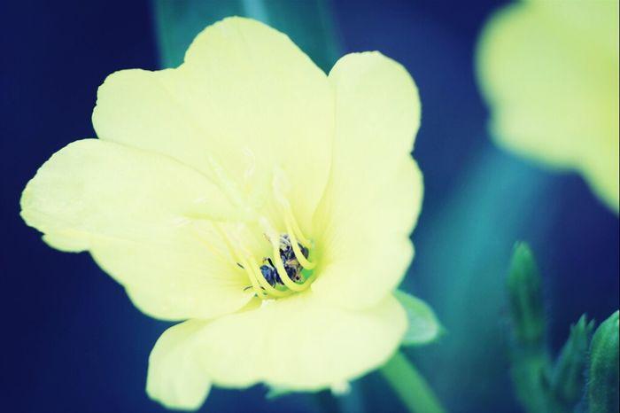 Gotcha! Nature Macro Insects  Bees