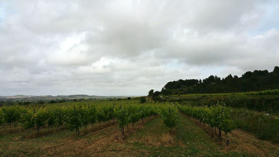 Languedoc-Roussillon Midi-Pyrenees Onestbienlà Landscape