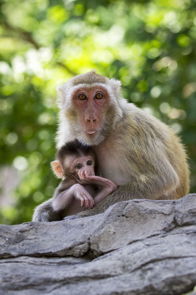 Asian  Zoo Animal Animal Family Animal Themes Animal Wildlife Animals In The Wild Baby Monkey Close-up Day Infant Japanese Macaque Lovely Mammal Mammals Monkey Mother Monkey Nature Outdoors Portrait Sitting Togetherness Two Animals Two Monkeys Young Animal