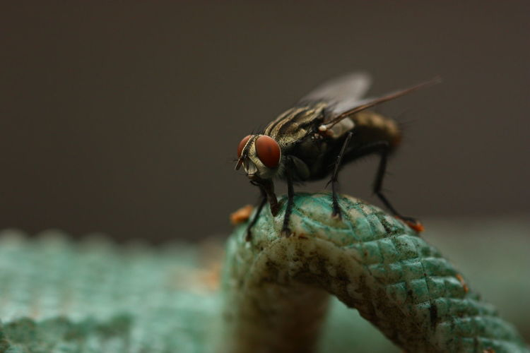 Close-up of housefly on lizard leg