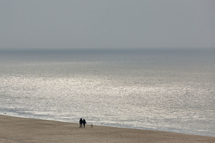 High angle view of couple walking with dog at shore of beach