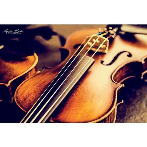 Violinos em foco 2 Demerson Mendes Fotografia Music Musica Som Orquestra Arte FotoShow Fotografia Nikon Santarém Top Ensaiofotografico Brasil Braziligram OFS