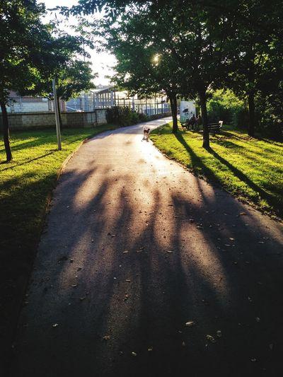 Walking in