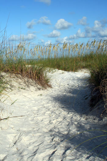 Blue Coastline Day Flowers Gulf Of Mexico Landscape Madeira Beach Florida Nature No People Outdoors Plant Saint Petersburg Florida Sand Scenics Seaoats Tampa Bay Tranquil Scene Water