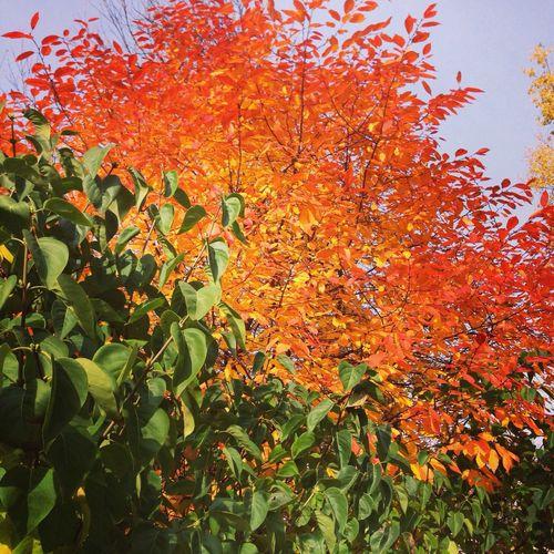 wonderful fall Autumn Autumn Colors Golden Days Enjoying Life