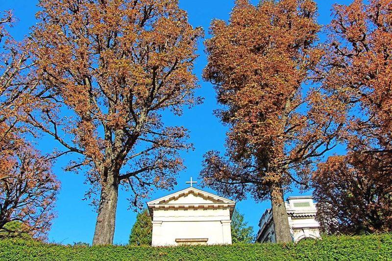 Paris, France  Paris France Sunshine Trees Tree OpenEdit Traveling Sky Cemetery Père Lachaise Grass