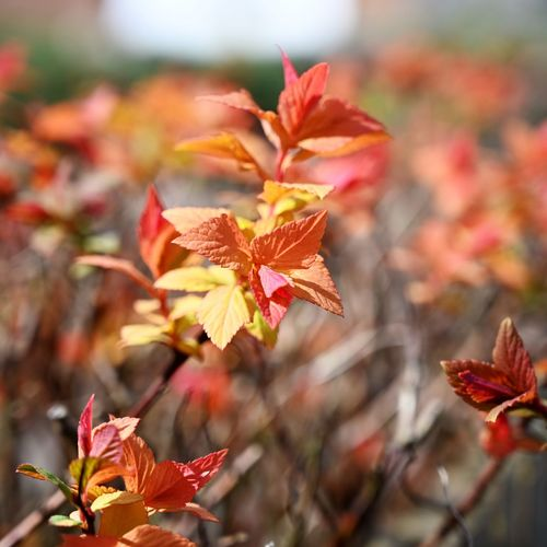 New Growth Plant Beauty In Nature Growth Vulnerability  Fragility Plant Part Close-up Leaf Freshness Nature Day Focus On Foreground Orange Color No People Outdoors Change