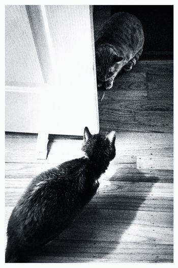 Cat Blackandwhite Sneezy