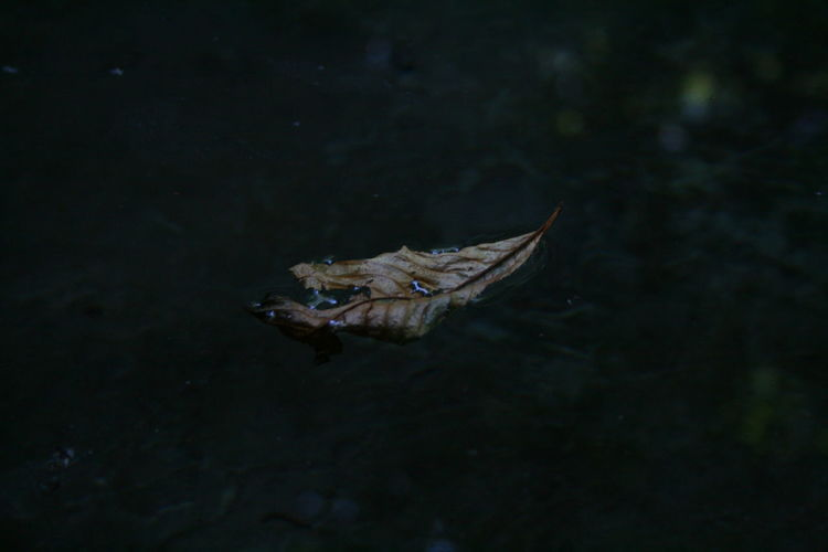 High Angle View Of Leaf Floating On Water At Night