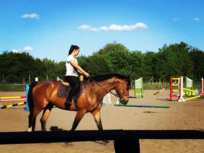 Oh my god 👌🏻😍 | Clinton Horse Holsteiner Love My Horse Such A Perfect Im In Love