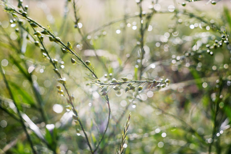 Background Beauty In Nature Belarus Belarus Nature Belarusian Nature Bokeh Close-up Day Dew Dew Drops Flowers Fragility Freshness Green Growth Nature No People Outdoors Plant Plants Rain Summer Textures Water