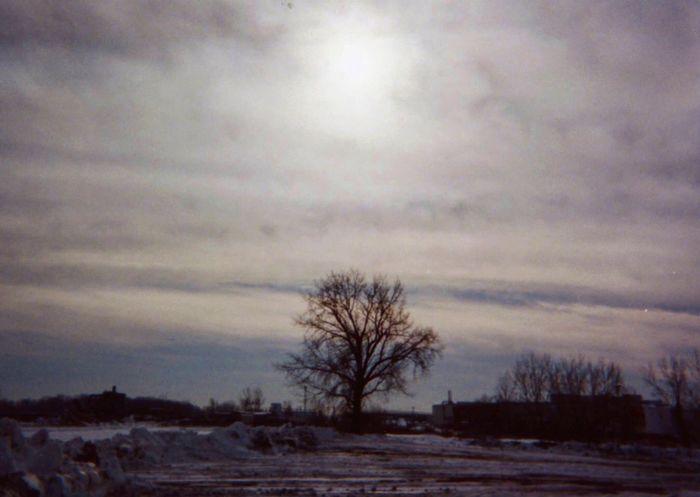 Low Noon Lone Tree Tree Noon Winter Cold 35mm Analogue Photography Film Landscape Urban Landscape Olympusxa Desolate Buffalo,ny Fresh On Eyeem  Fresh On Eyeem  Fine Art Photography