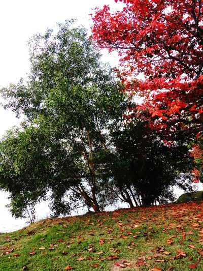 Tree No People Nature Low Angle View Growth Day Outdoors Branch Sky Park Beach Beauty In Nature Colourful Trees