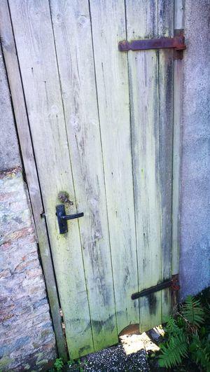 Close-up of lizard on wooden door
