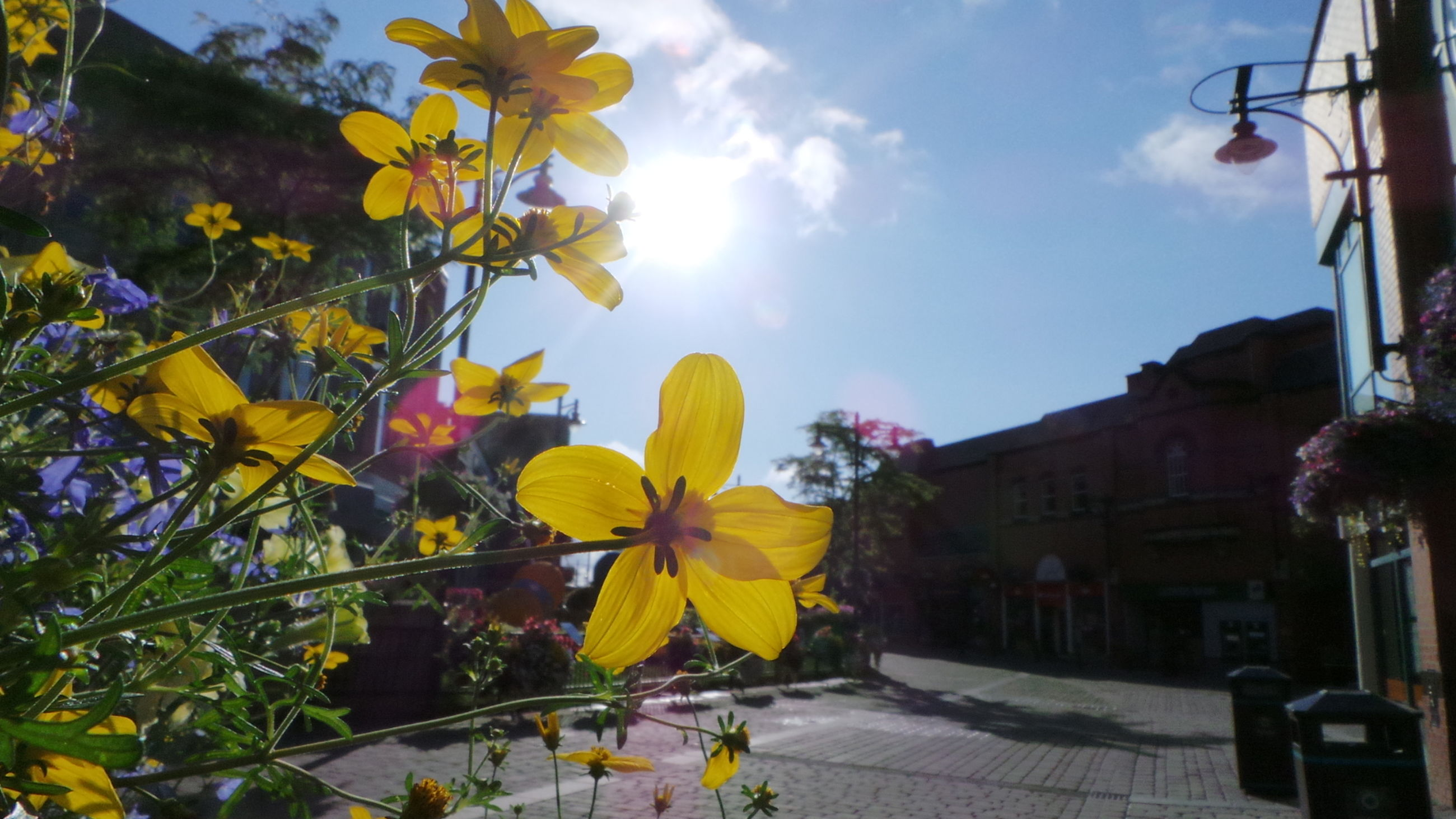 flower, freshness, building exterior, built structure, architecture, fragility, sky, growth, petal, yellow, low angle view, blooming, in bloom, beauty in nature, nature, plant, blossom, sunlight, tree, flower head
