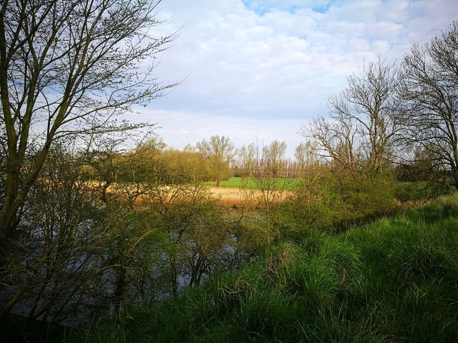 Nature Tree Growth Sky Beauty In Nature Scenics Tranquility No People Outdoors Tranquil Scene Water Landscape Nature Dutch Countyside Dutch Landscape Dutch Landscapes Tree Brielle Beauty In Nature