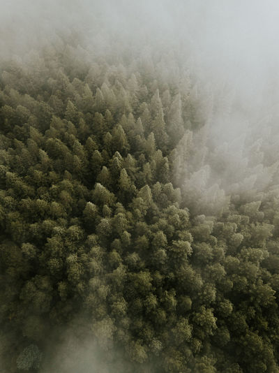 Aerial Shot Cloud Drone  Aerial View Beauty In Nature Cloud - Sky Day Environment Fog Forest Full Frame High Angle View Idyllic Landscape Nature No People Non-urban Scene Outdoors Scenics - Nature Sky Tranquil Scene Tranquility Tree