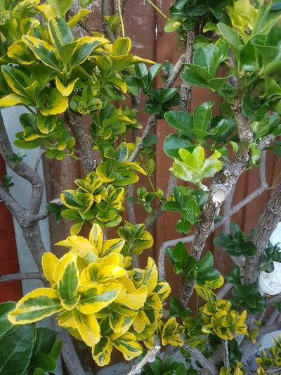 viny plant