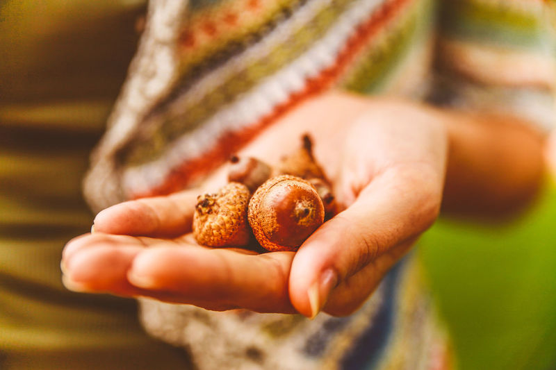 Cropped Image Of Woman Holding Acorns
