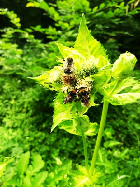 Green Color Plant Nature Insect Animals In The Wild One Animal Leaf Outdoors Spider Animal Wildlife Day Close-up No People Growth Animal Themes Flower