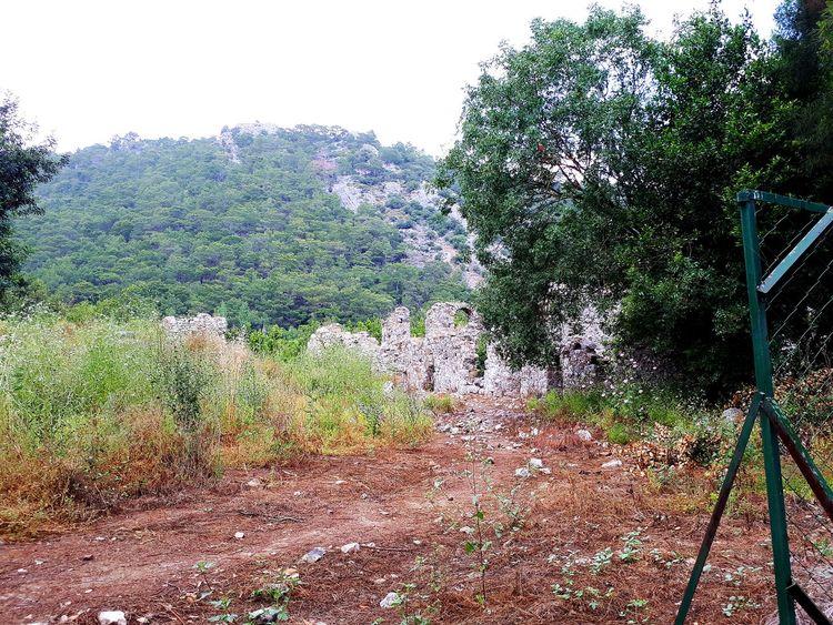 olimpos Harabeleri Tree Olimpos, Kemer Olimposbeach Olimpos Karpathos Tree Pixelated Sky Close-up Growth