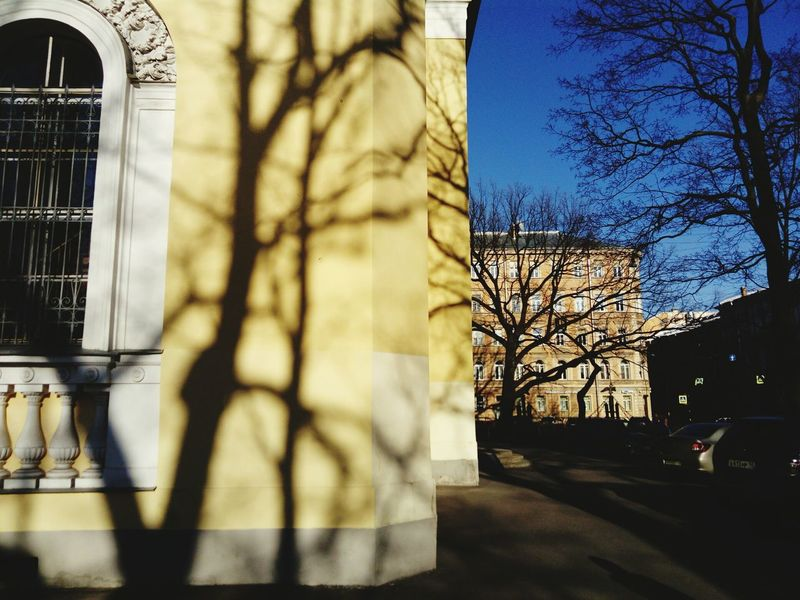 Spring shadows Shadows & Lights Long Shadows Spring EyeEm Selects Tree Bare Tree Shadow Architecture Building Exterior Built Structure Skyscraper Branch Downtown Cityscape