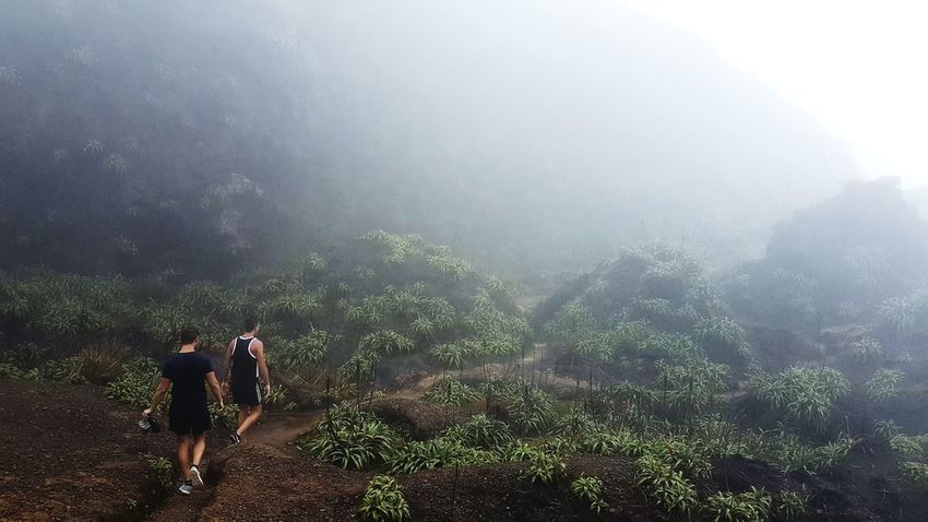 Guadeloupe Gwadeloupe Gwada  Soufriere Green Beauty In Nature Landscape Nature Forest Outdoors Adventure Fog