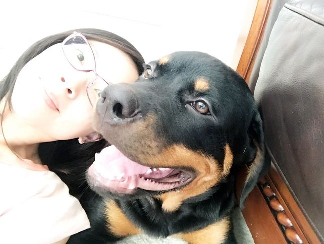 Nerdy Lasian Rottweiler Puppy mom. Perrijo Fur Baby I Love My Rottie Dog Pets Domestic Animals Lying Down Mammal Togetherness Headshot Sitting Day Indoors  Human Body Part Close-up Friendship People This Is Family