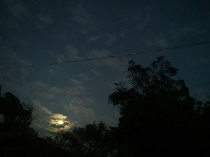 Tree Night Sky Moon