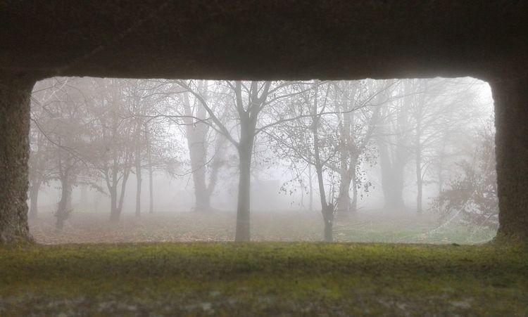 Fog Italy🇮🇹