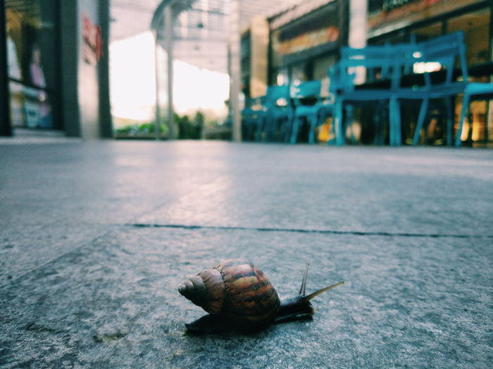 Phototography Snail🐌 One Animal Animal Themes Day No People Animals In The Wild Outdoors Architecture #FREIHEITBERLIN