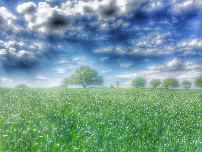 Just outside my door ! Morning Nature Green Trees And Sky Beutiful  Freedom Photography Love Clouds And Sky World Wintertime Endlessness Fields Of Gold Outside Seasons Clouds