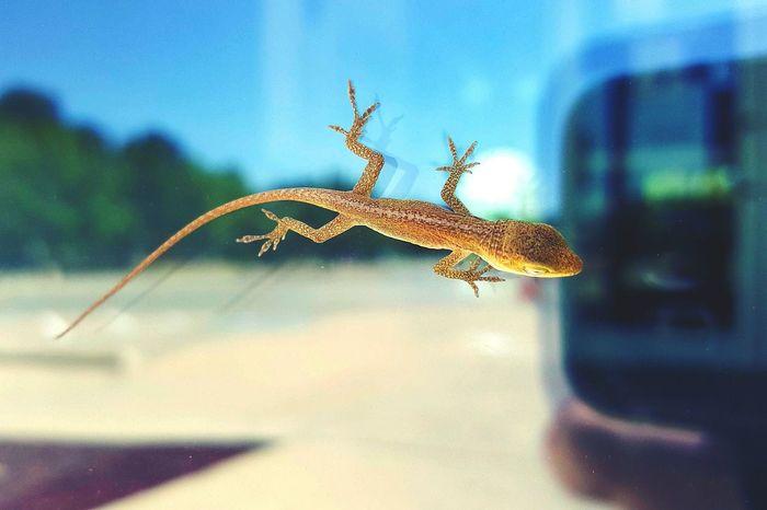 Found him at work. Lizard Loungin