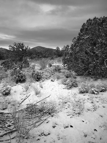 """After The Storm"" Snow blankets the ground, downed wood and trees in the Juniper Woodlands of Central New Mexico after a storm. New Mexico Photography New Mexico Skies New Mexico Blackandwhite Photography Black And White Blackandwhite Nature Winter Tranquil Scene Snow Tranquility No People Sky Scenics Landscape Mountain Cloud - Sky Tree Cold Temperature"