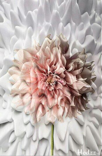 Flowers Show Me The LOVE NEM Painterly Popart Kunst