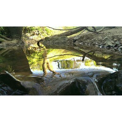 Reflections Nature Stream Exploringnature Explorecapetown Instawalker Instaexplorer Instahike Hiking Igerscapetown Cityofcapetown