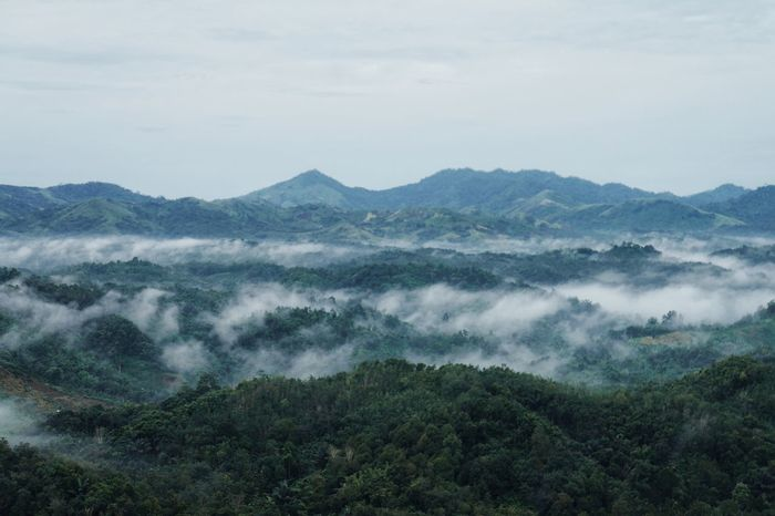 Landscape Mountain Nature Growth Tree No People Sky Mountain Range Scenics at bukit halinjuangan INDONESIA